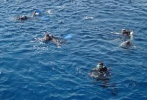 акулы шарм
