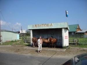 кони на остановке